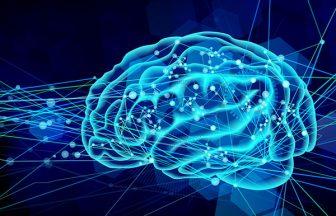 デジタル脳