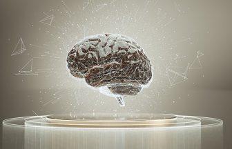 分析されている脳